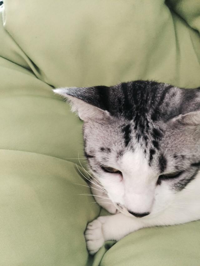 ネコ,猫,写真,展覧会,髙﨑優詞,シロクロ
